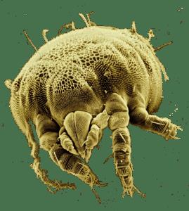 professionelle Milbenentfernung